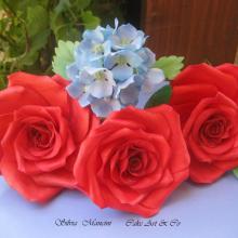 Un pò di fiori